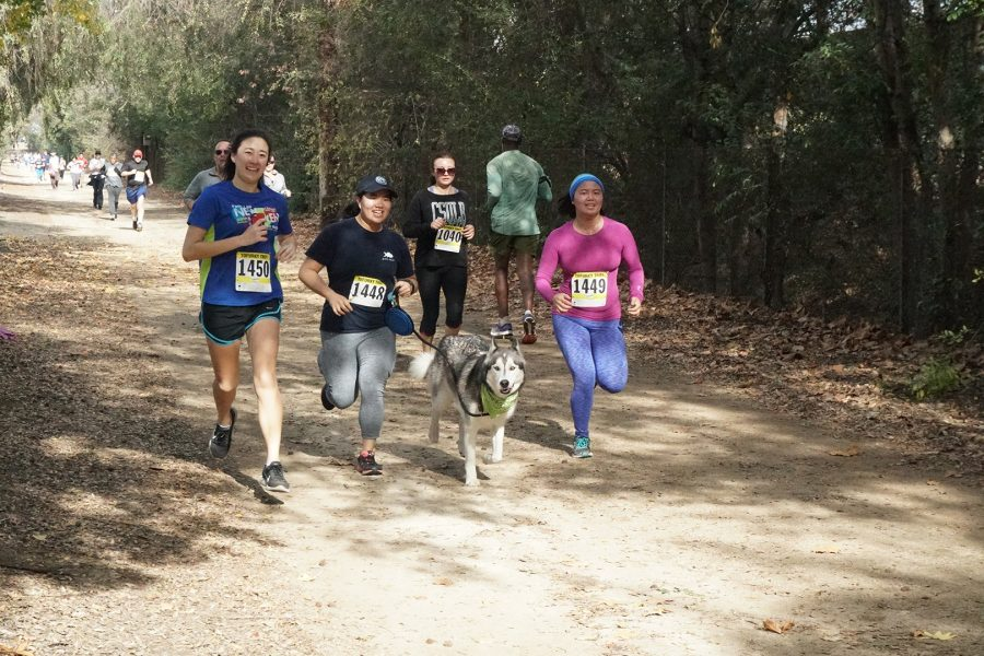 Runners during Tofurky Trot Fun Run 5K at Griffith Park on Sunday, Nov. 25. Photo Credit: Andy Lizarraga/SAC.Media