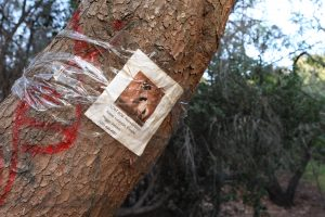 A lost dog poster is found taped to a vandalized oak tree beyond the entrance to the park on March 4, 2020. Photo credit: Abraham Navarro/SAC.Media.
