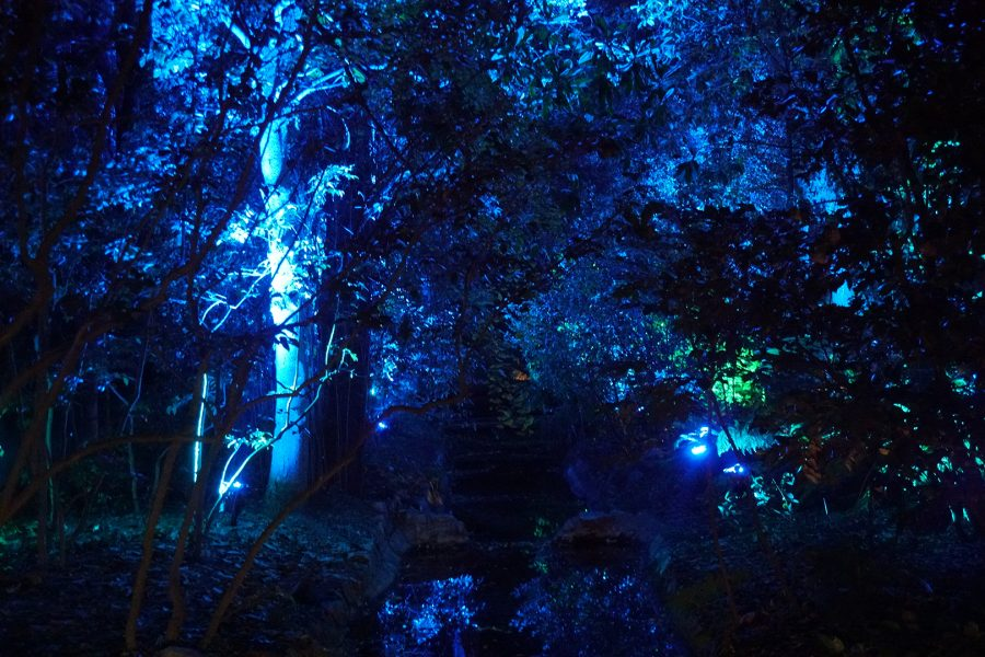 Enchanted Forest of Lights in Descanso Gardens. Photo credit: Andy Lizarraga/SAC.Media